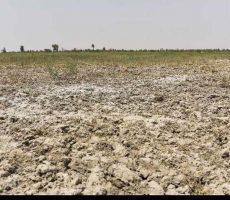 خشکسالی به حدود 95 درصد جمعیت نیمروز آسیب جدی وارد کرد