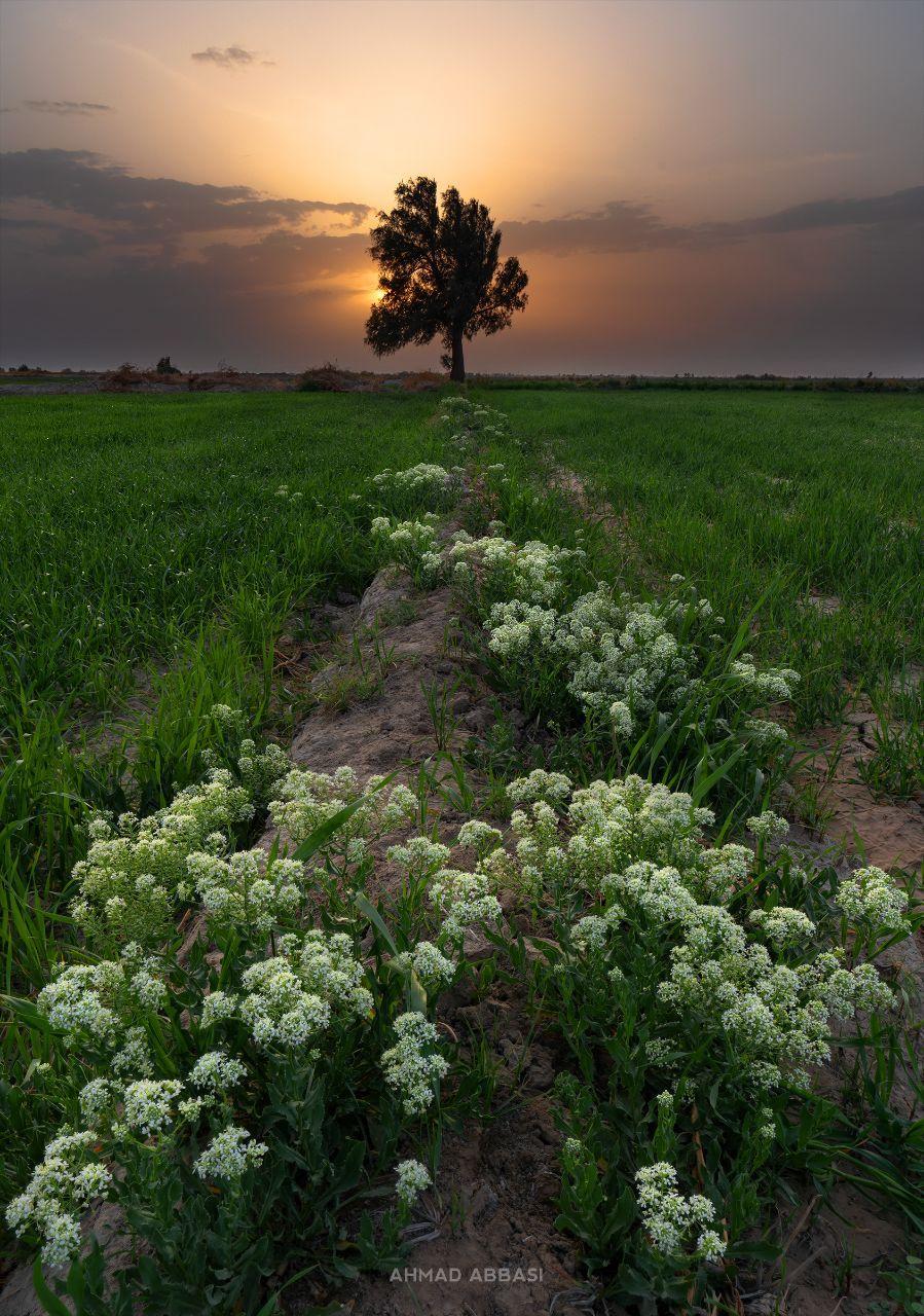بهار ۹۹ در سیستان   عکس از احمد عباسی