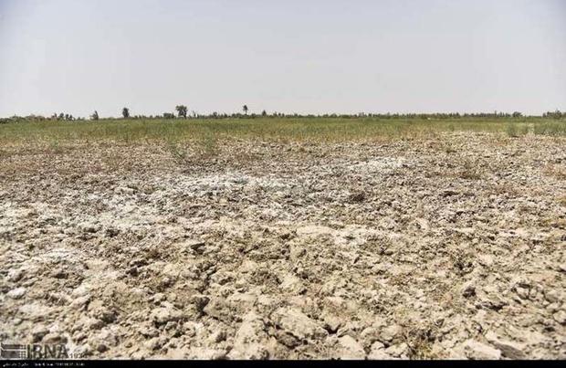 خشکسالی ۱۵۴ میلیارد تومان به کشاورزان هامون خسارت وارد کرد
