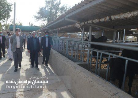 گزارش تصویری بازدید دکتر برومندی معاون وزیر جهاد کشاورزی از بخش های مختلف مجتمع تحقیقاتی بقیه الله الاعظم (عج) چاه نیمه دانشگاه زابل